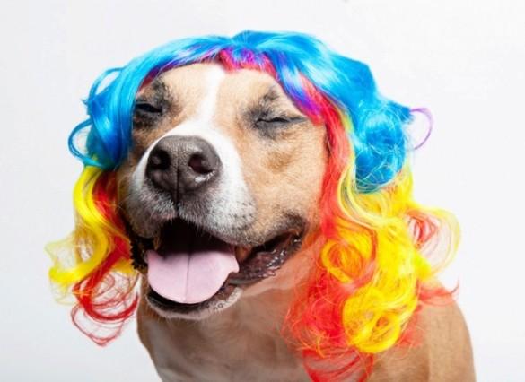 dog-rainbow-585x426